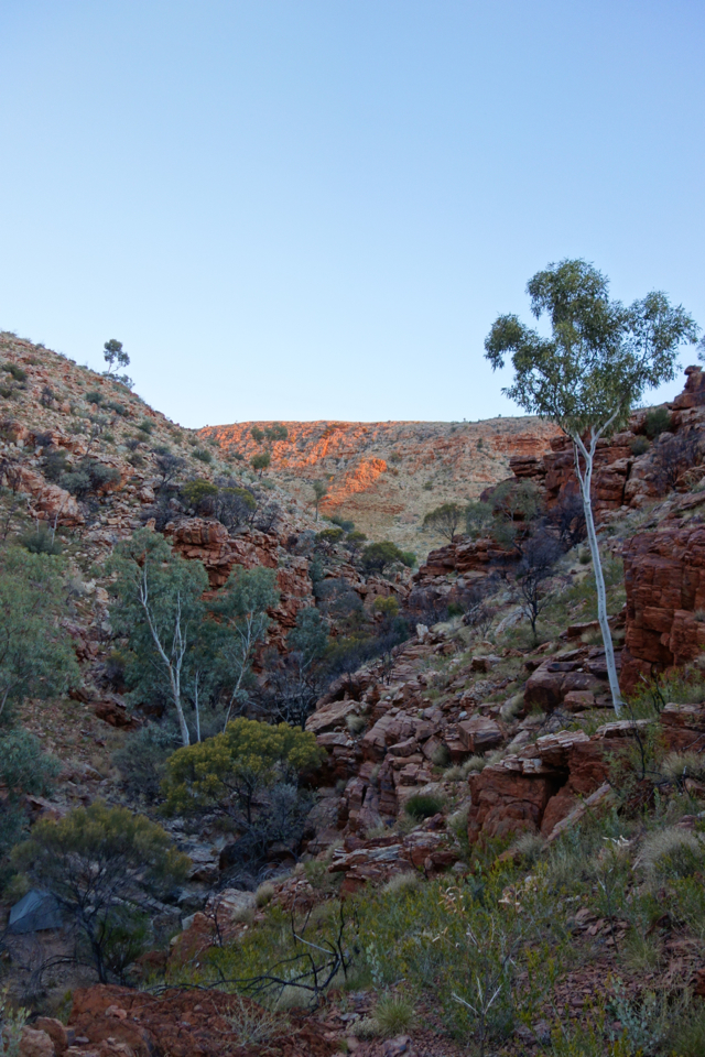 Larapinta - Best off - 064