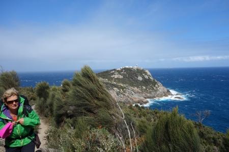 Wind Swept Coast